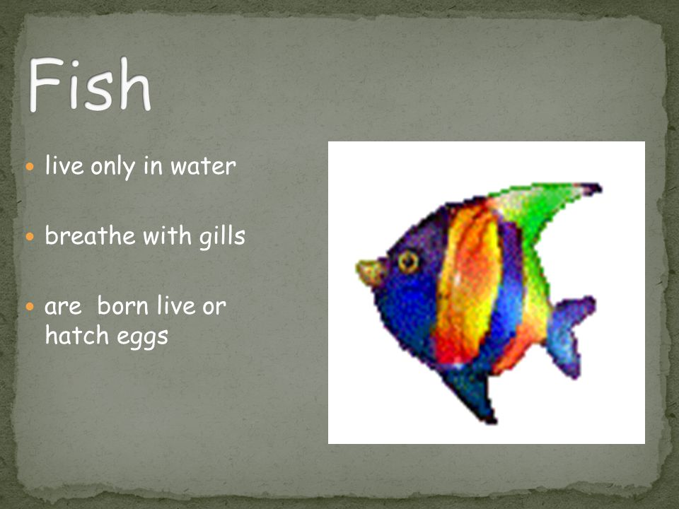 live only in water breathe with gills are born live or hatch eggs
