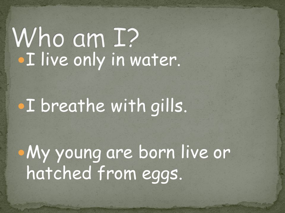 I live only in water. I breathe with gills. My young are born live or hatched from eggs.
