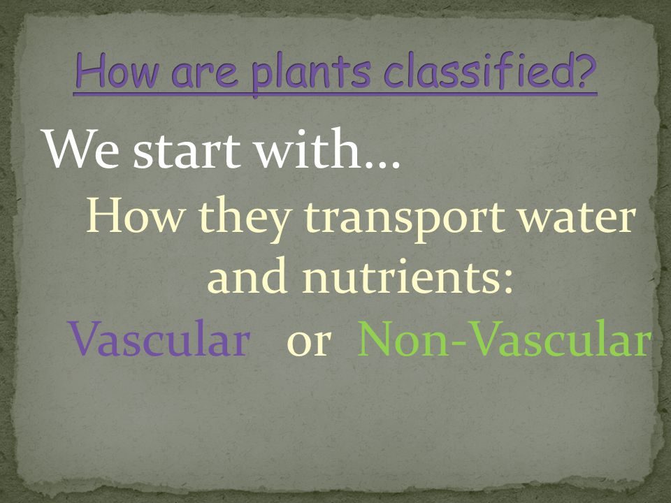We start with… How they transport water and nutrients: Vascular or Non-Vascular