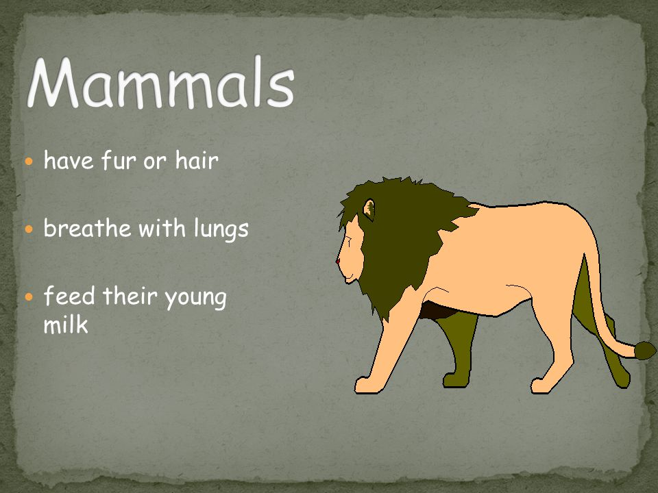 have fur or hair breathe with lungs feed their young milk