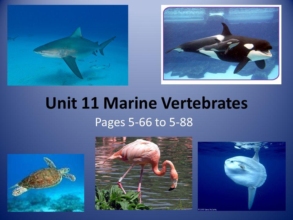 Unit 11 Marine Vertebrates Pages 5-66 to 5-88