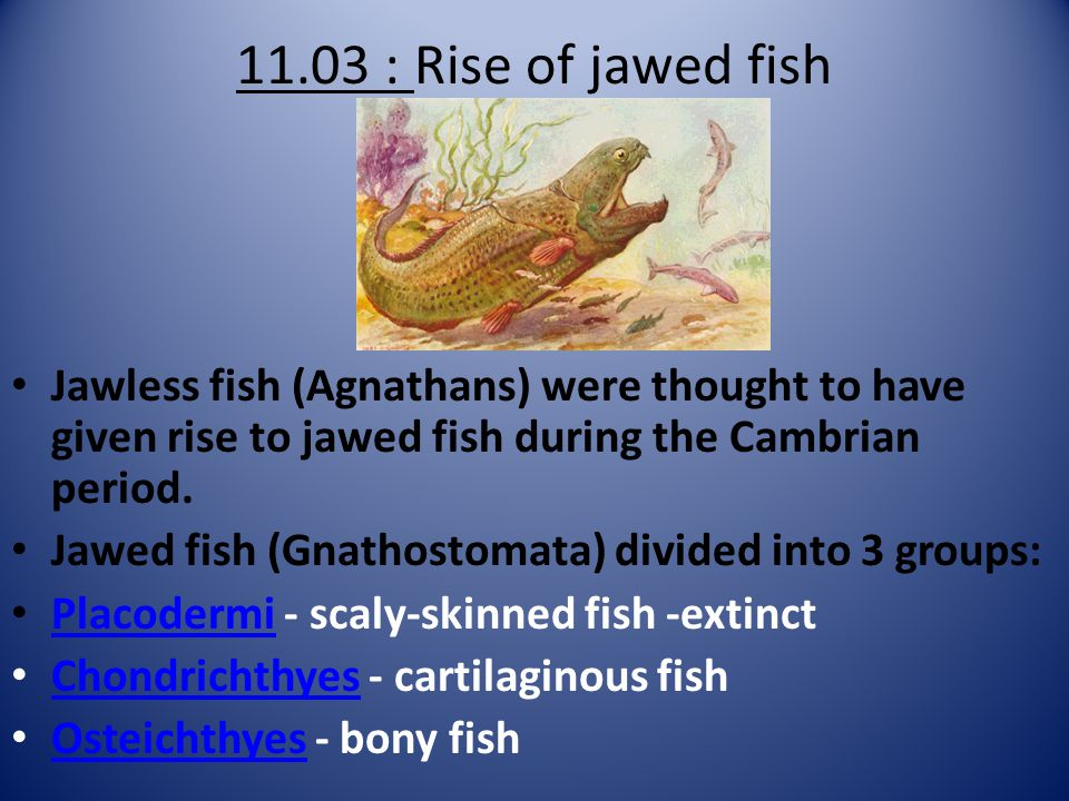 11.03 : Rise of jawed fish Jawless fish (Agnathans) were thought to have given rise to jawed fish during the Cambrian period. Jawed fish (Gnathostomat