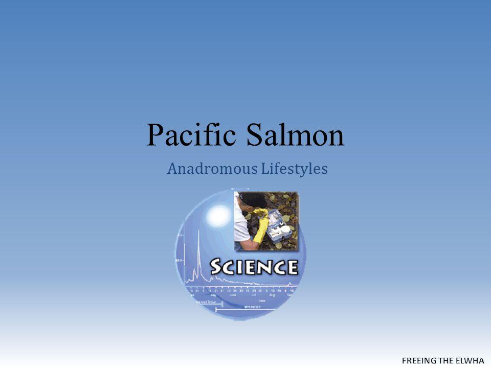 Pacific Salmon Anadromous Lifestyles