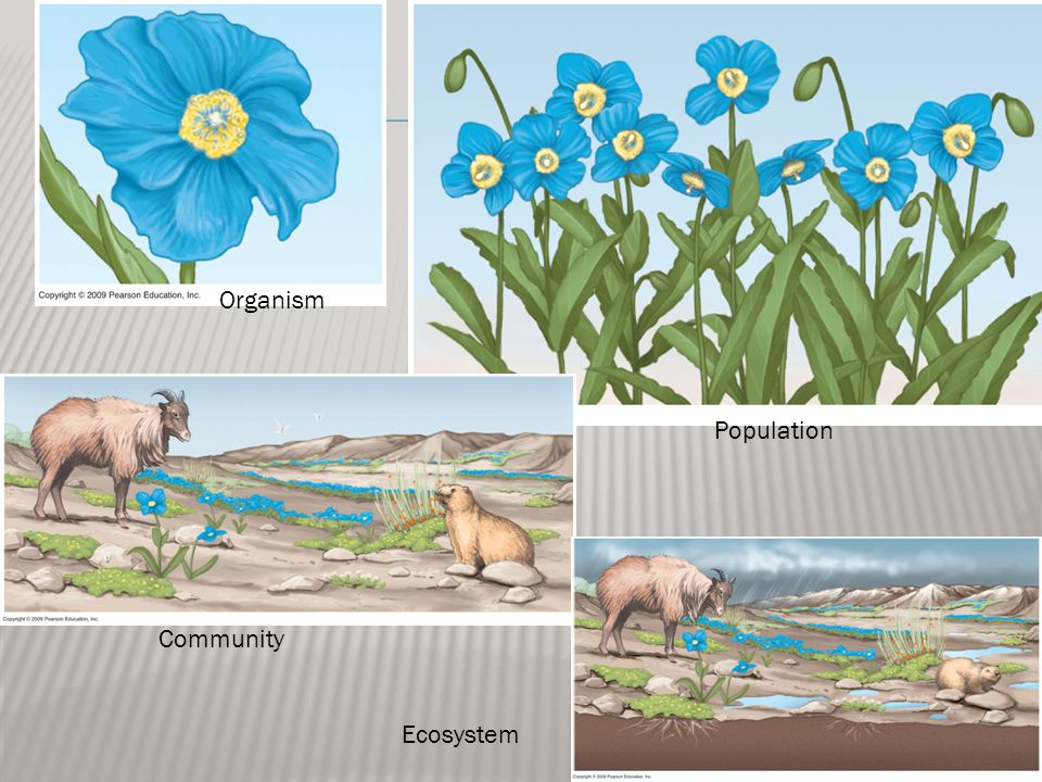 Organism Population Community Ecosystem