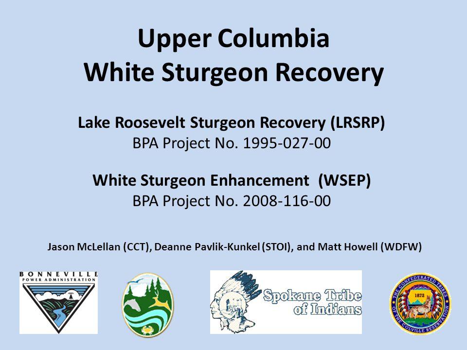 Lake Roosevelt Sturgeon Recovery (LRSRP) BPA Project No. 1995-027-00 White Sturgeon Enhancement (WSEP) BPA Project No. 2008-116-00 Upper Columbia Whit