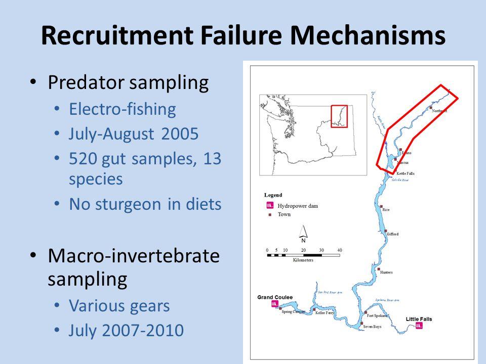 Predator sampling Electro-fishing July-August 2005 520 gut samples, 13 species No sturgeon in diets Macro-invertebrate sampling Various gears July 200