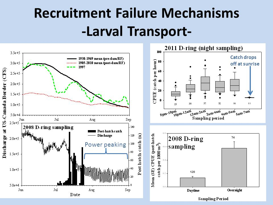 Recruitment Failure Mechanisms -Larval Transport- Power peaking Catch drops off at sunrise