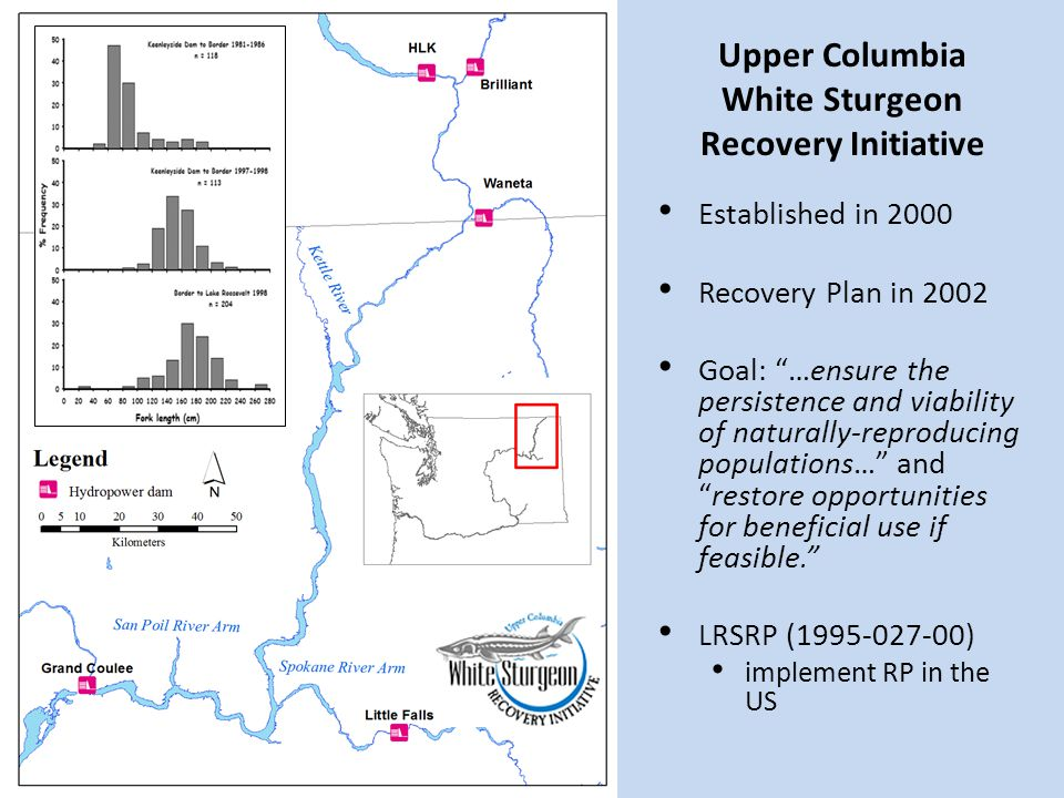 """Upper Columbia White Sturgeon Recovery Initiative Established in 2000 Recovery Plan in 2002 Goal: """"…ensure the persistence and viability of naturally-"""