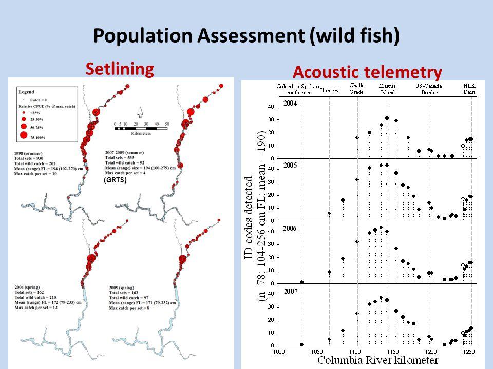 Population assessment (wild fish) Adult (FL>150 cm) conditionSetline catch composition