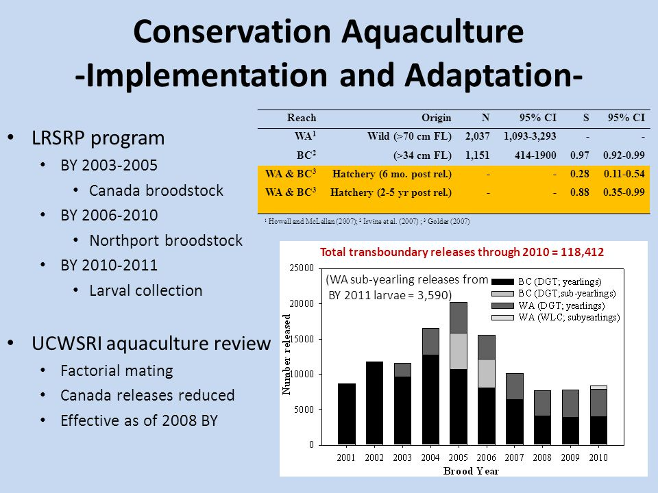 Conservation Aquaculture -Implementation and Adaptation- LRSRP program BY 2003-2005 Canada broodstock BY 2006-2010 Northport broodstock BY 2010-2011 Larval collection UCWSRI aquaculture review Factorial mating Canada releases reduced Effective as of 2008 BY (WA sub-yearling releases from BY 2011 larvae = 3,590) ReachOriginN95% CIS WA 1 Wild (>70 cm FL)2,0371,093-3,293-- BC 2 (>34 cm FL)1,151414-19000.970.92-0.99 WA & BC 3 Hatchery (6 mo.
