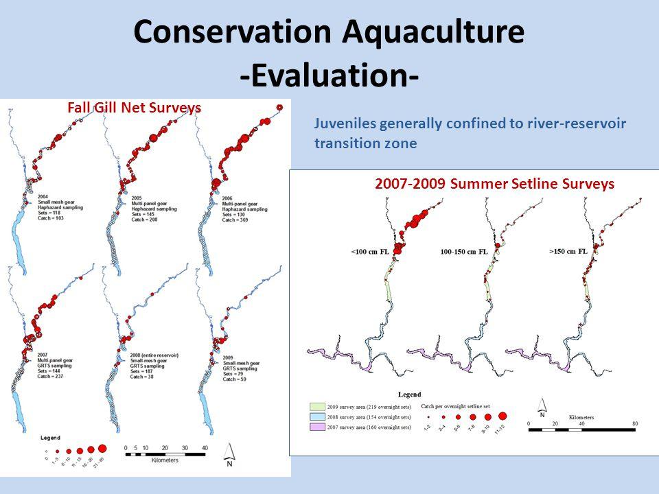 Conservation Aquaculture -Evaluation- 2007-2009 Summer Setline Surveys Fall Gill Net Surveys Juveniles generally confined to river-reservoir transitio
