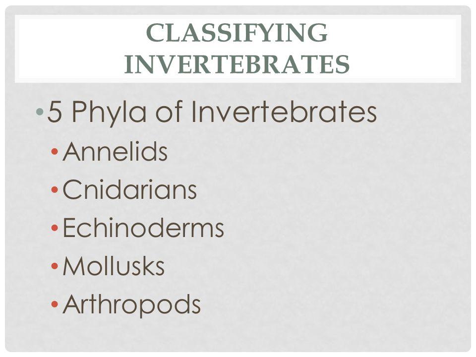 CLASSIFYING INVERTEBRATES 5 Phyla of Invertebrates Annelids Cnidarians Echinoderms Mollusks Arthropods