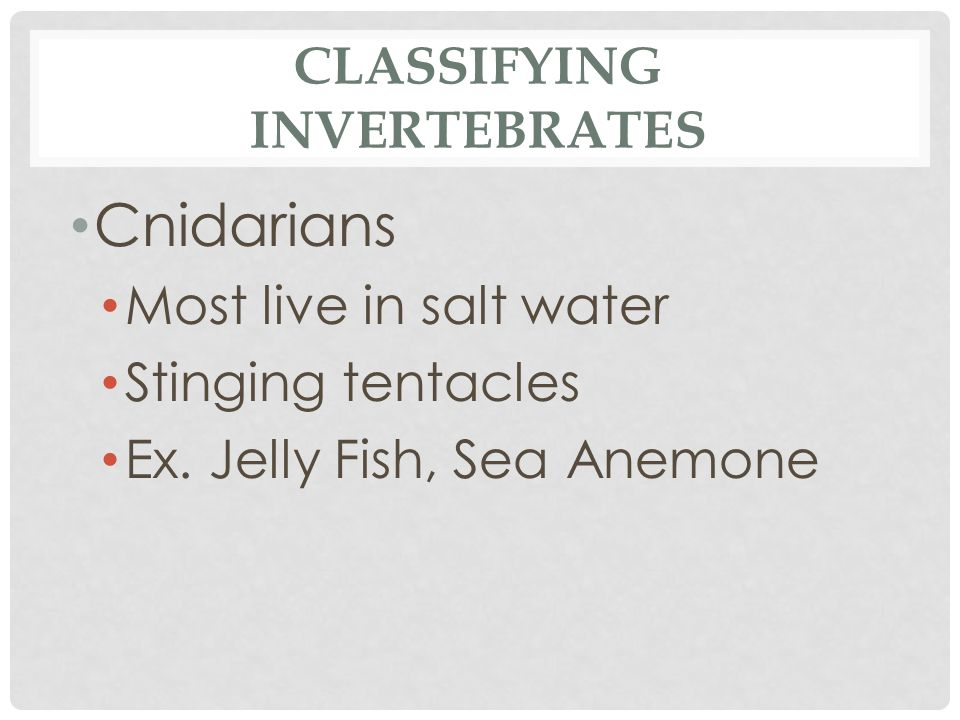 CLASSIFYING INVERTEBRATES Cnidarians Most live in salt water Stinging tentacles Ex. Jelly Fish, Sea Anemone