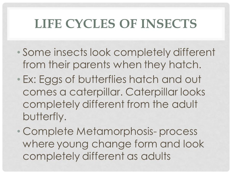 LIFE CYCLES OF INSECTS Some insects look completely different from their parents when they hatch. Ex: Eggs of butterflies hatch and out comes a caterp
