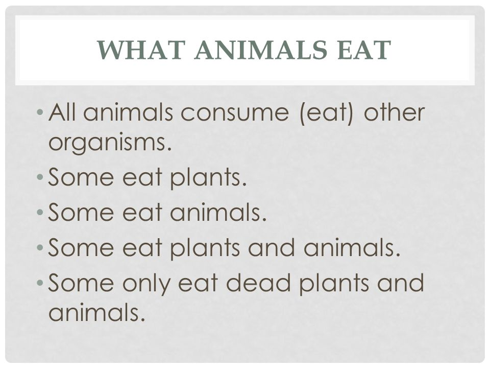 WHAT ANIMALS EAT All animals consume (eat) other organisms. Some eat plants. Some eat animals. Some eat plants and animals. Some only eat dead plants