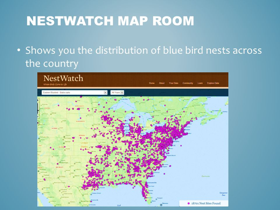 NESTWATCH MAP ROOM Shows you the distribution of blue bird nests across the country