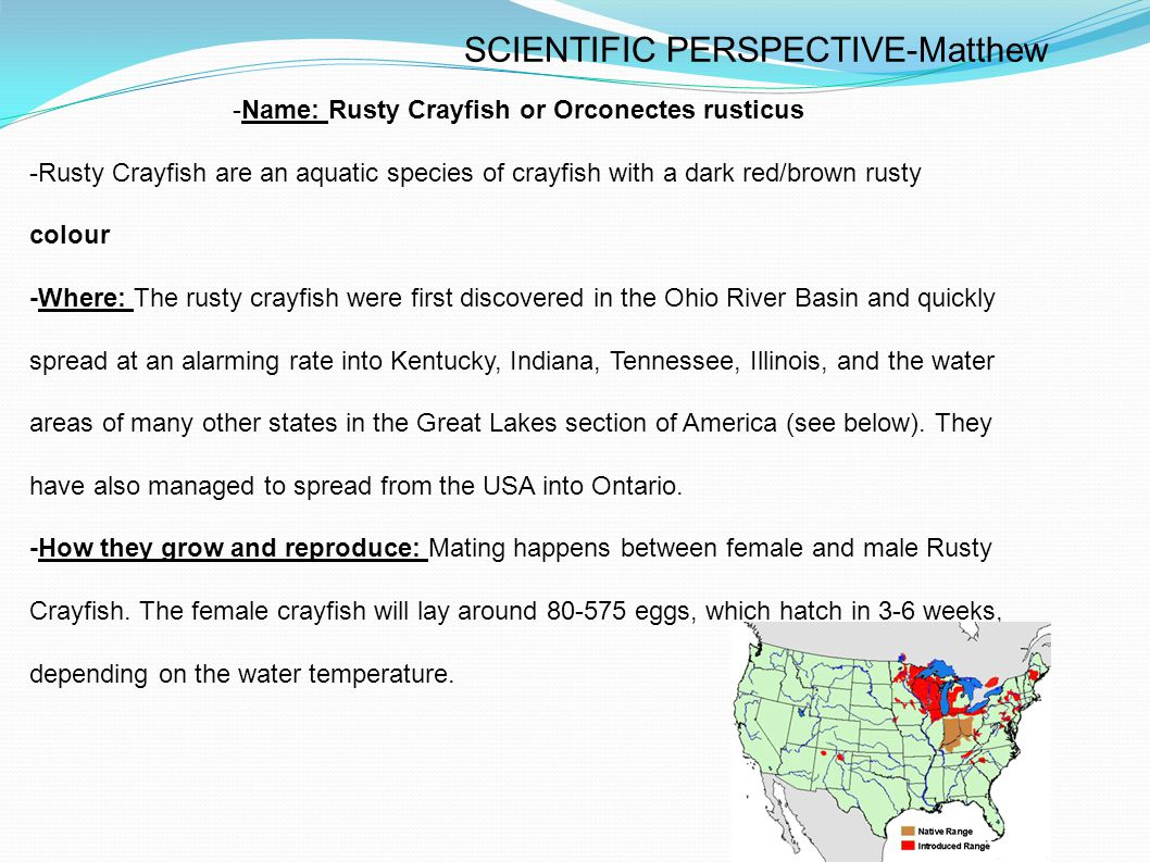 Rusty Crayfish are multiplying fast, and there is currently no effective or proven way to reduce rusty crayfish population without harming other species.