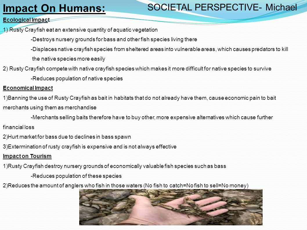 How Rusty Crayfish can be Controlled by Humans: Impact On Health 1)Harms its new food web -Kills predators eggs -Competes with native crayfish for food -Puts native crayfish into vulnerability Mechanical 1) Banning use or transportation of Rusty Crayfish as bait 2) Prevention is the best method for dealing with Rusty Crayfish -Barriers or nets that can prevent the further spread of Rusty Crayfish -Traps are a simple, yet effective way of removing small quantities of the Rusty Crayfish Chemical 1) Adding chemicals into aquatic vegetation to change it's odour -Turns away Rusty Crayfish into believing that the vegetation is not editable1 Biological 1) Augmenting predators -Protecting bass's eggs by putting them into an incubator then releasing them back into their natural ecosystem SOCIETAL PERSPECTIVE Contd.