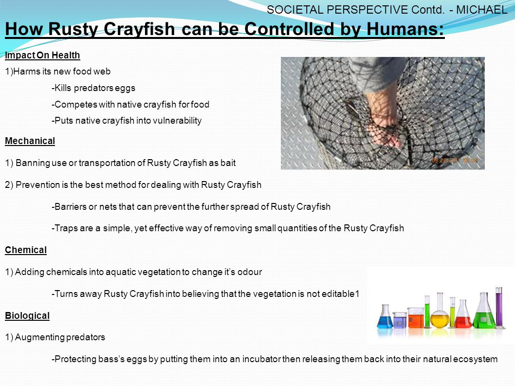 Effects on Native Crayfish.The Rusty Crayfish Displaces the Native Crayfish.