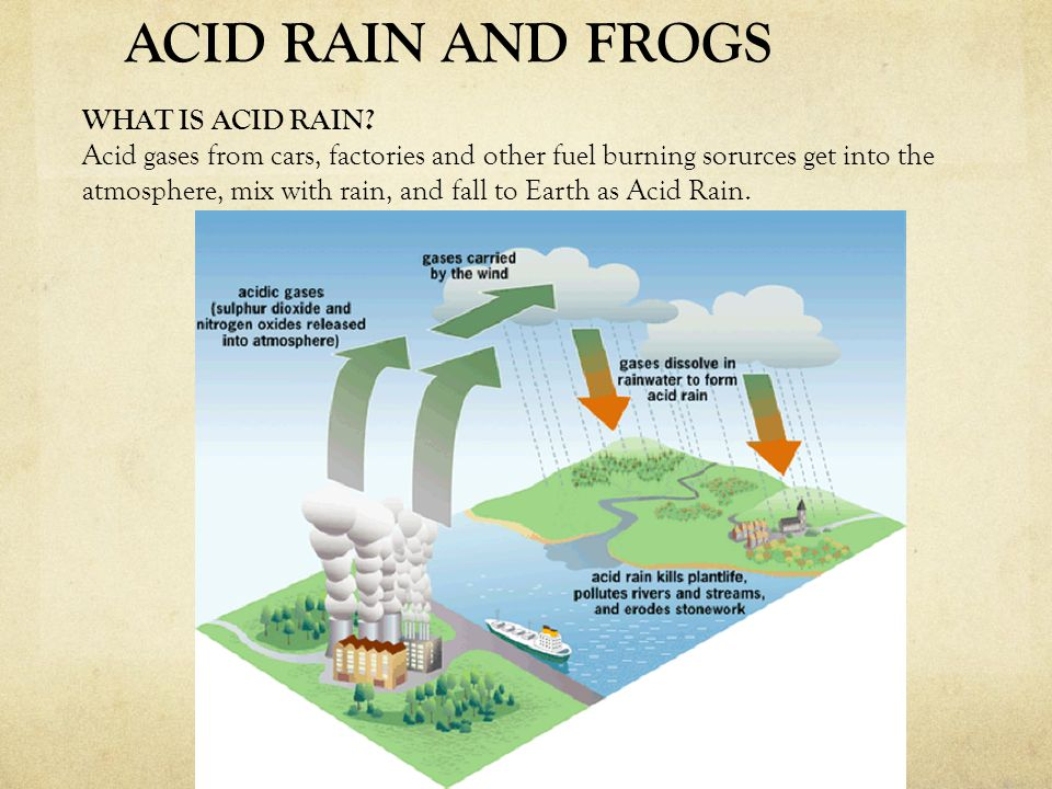 WHAT IS ACID RAIN? Acid gases from cars, factories and other fuel burning sorurces get into the atmosphere, mix with rain, and fall to Earth as Acid R