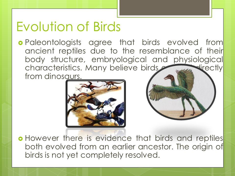 Birds  Birds have a number of adaptations that enable them to fly.