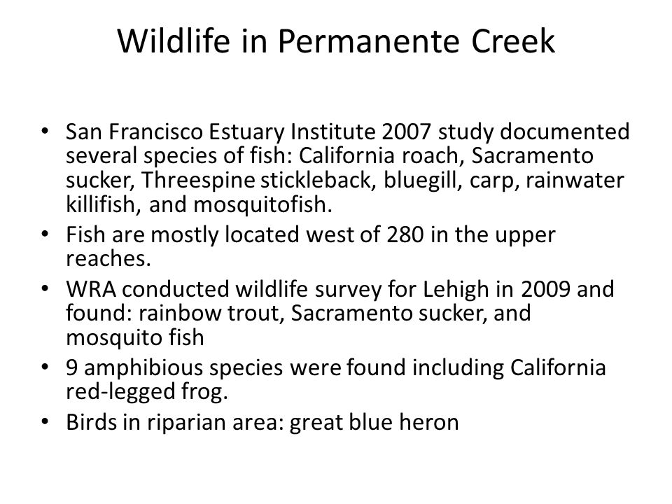 Wildlife in Permanente Creek San Francisco Estuary Institute 2007 study documented several species of fish: California roach, Sacramento sucker, Threespine stickleback, bluegill, carp, rainwater killifish, and mosquitofish.