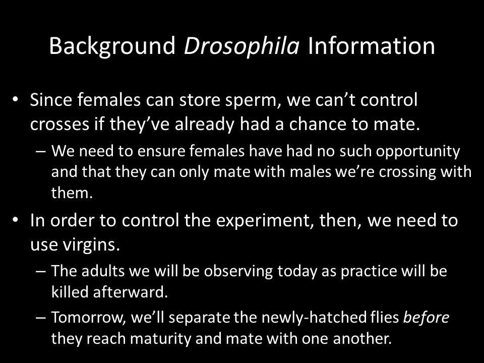 Background Drosophila Information Since females can store sperm, we can't control crosses if they've already had a chance to mate. – We need to ensure
