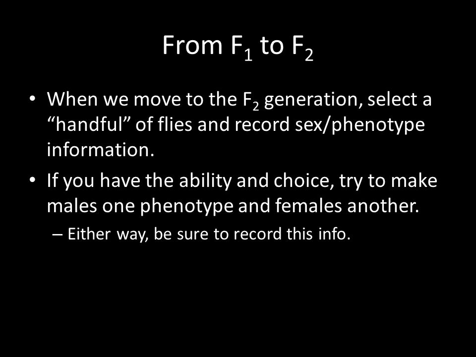 "From F 1 to F 2 When we move to the F 2 generation, select a ""handful"" of flies and record sex/phenotype information. If you have the ability and choi"