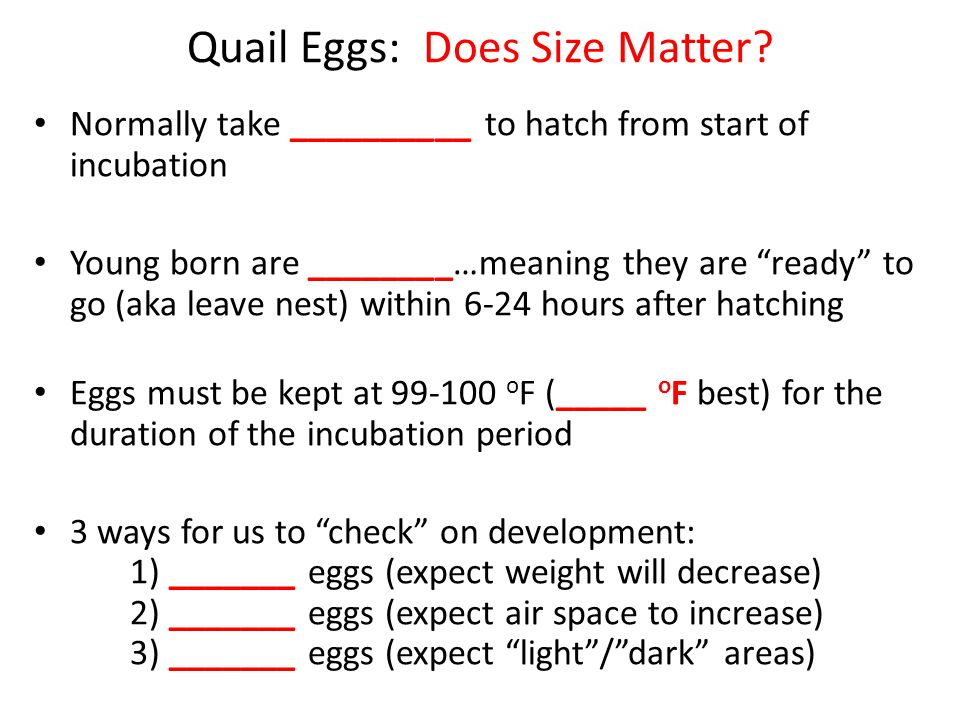 """Quail Eggs: Does Size Matter? Normally take __________ to hatch from start of incubation Young born are ________…meaning they are """"ready"""" to go (aka l"""