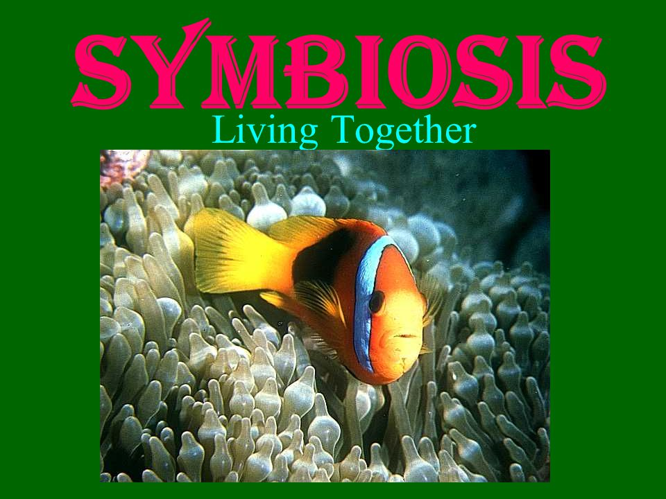Three Types of Symbiosis Mutualism both species benefit Commensalism one species benefits, the other is unaffected Parasitism one species benefits, the other is harmed