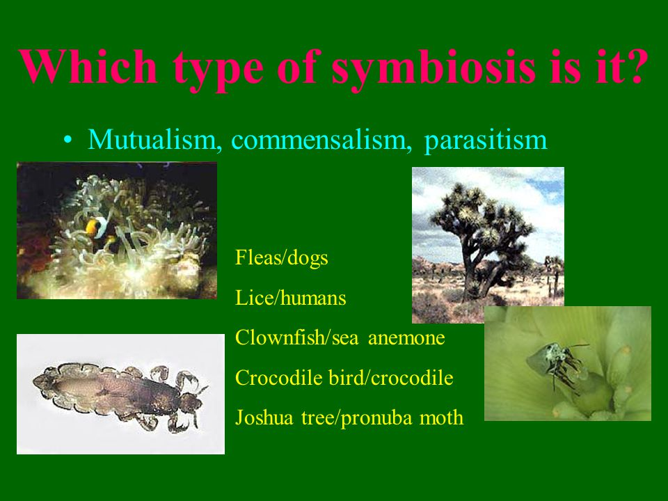 Which type of symbiosis is it.
