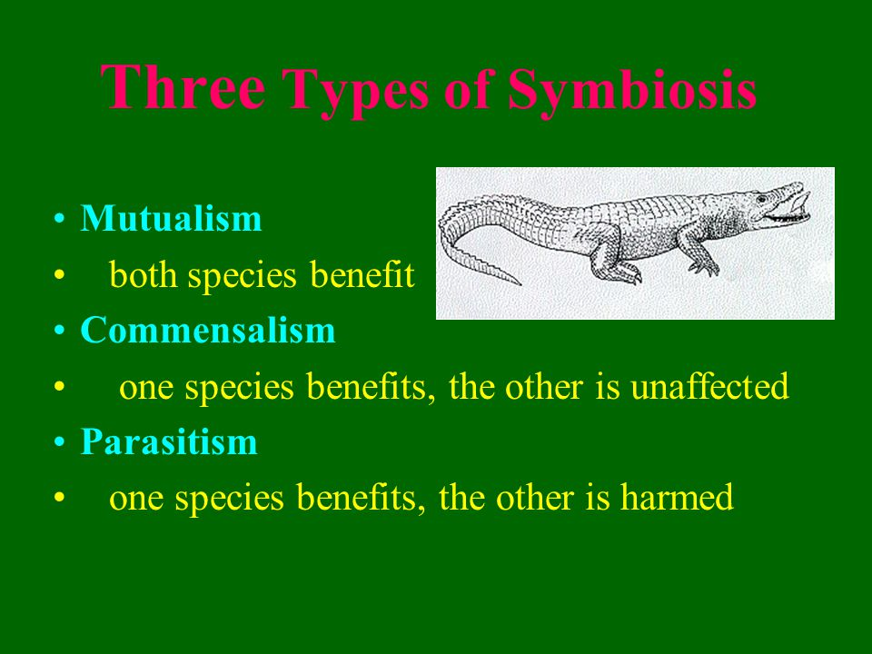 Mutualism Both organisms benefit from the relationship The otters help the kelp by eating the sea urchins which endanger it.