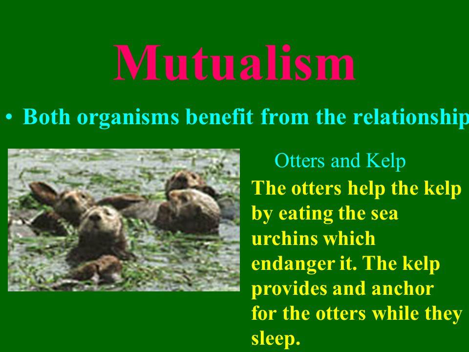 Lichen Lichen is really two organisms: algae and fungus.