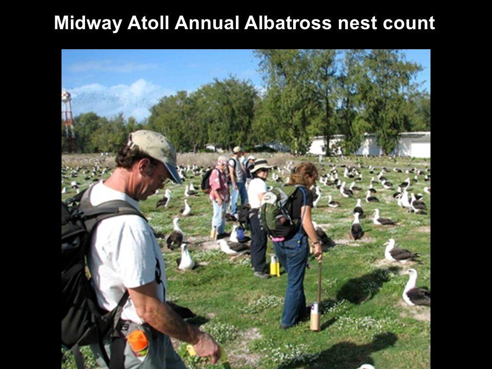 Midway Albatross count team 2014