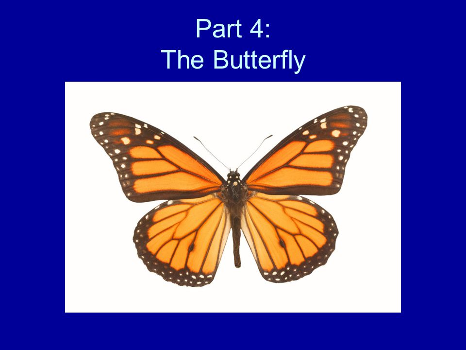 Part 4: The Butterfly