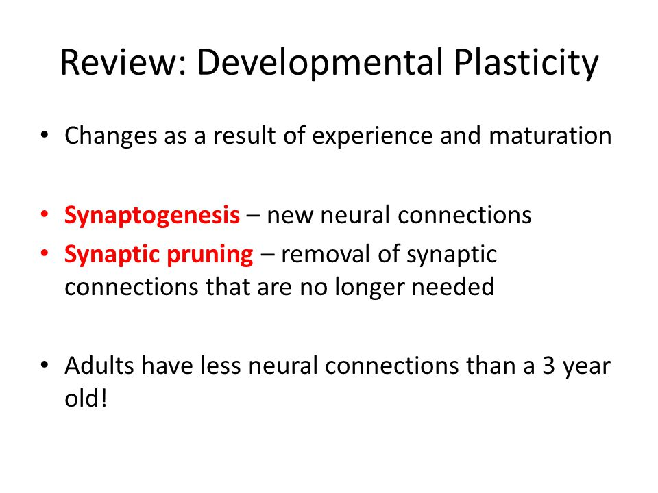 Review: Developmental Plasticity Changes as a result of experience and maturation Synaptogenesis – new neural connections Synaptic pruning – removal o