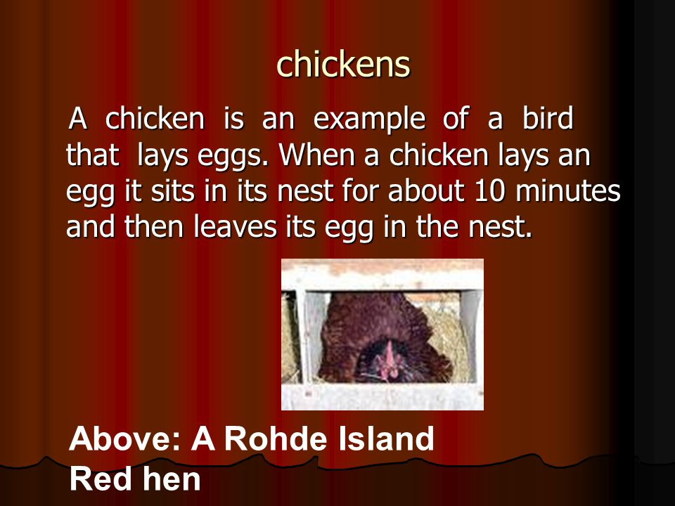 Table of contents Chickens - slide 3 Chickens - slide 3 What are the differences between hens and roosters.