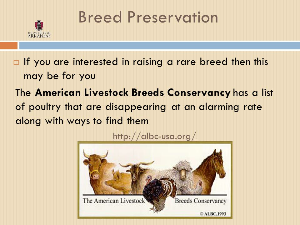 Breed Preservation  If you are interested in raising a rare breed then this may be for you The American Livestock Breeds Conservancy has a list of poultry that are disappearing at an alarming rate along with ways to find them http://albc-usa.org/