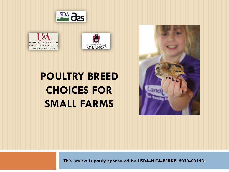 POULTRY BREED CHOICES FOR SMALL FARMS This project is partly sponsored by USDA-NIFA-BFRDP 2010-03143.