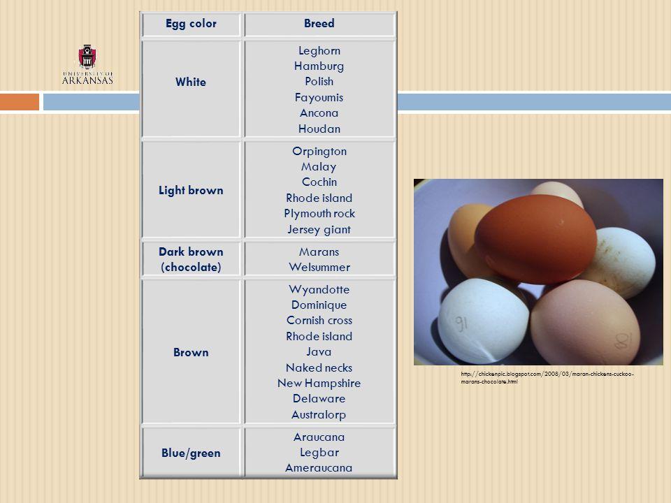 http://chickenpic.blogspot.com/2008/03/maran-chickens-cuckoo- marans-chocolate.html