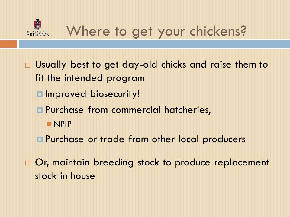 Where to get your chickens.