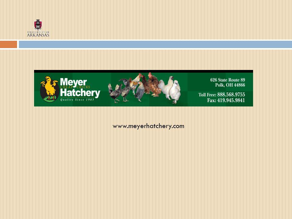 www.meyerhatchery.com