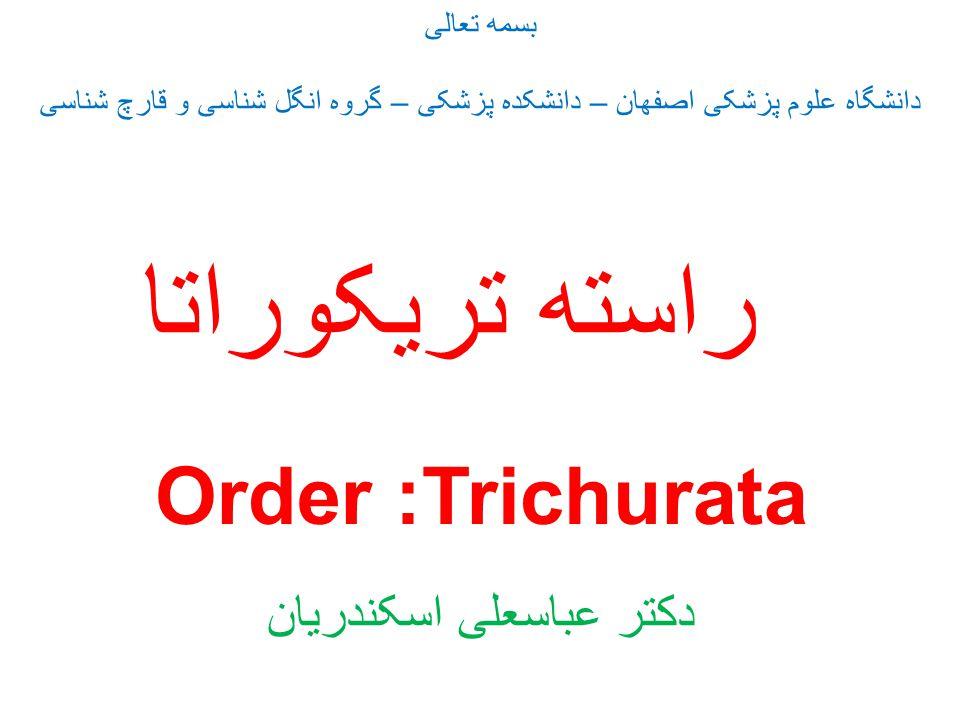 راسته تریکوراتا : Order Trichurata تمام اعضای این راسته دارای سلولهای مشخصی در ناحیه مری بنام سلول های استیکوسیت هستند از نظر اندازه به دو دسته : 1- کاملا ماکروسکوپی (3-5 س X 1 س ) ، بدن دارای دو قسمت متمایز و نامتناسب از نظر ضخامت : خانواده تریکوریده – جنس : تریکوریس، تنها گونه انسانی :Trichuris trichiura (Trichocephal) X 25 2- کاملا میکروسکوپی (1000 میکرون × 40 میکرون ) ، طول بدن تقریبا ضخامت یکسان دارند X 1000 خانواده های : تریشینلیده Family Trichinellidae Genus: Trichinella T.spiralis و کاپیلاریا Family Capilaridae C.