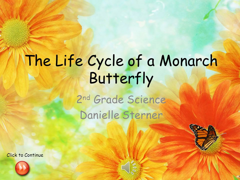The Life Cycle of a Monarch Butterfly 2 nd Grade Science Danielle Sterner Click to Continue