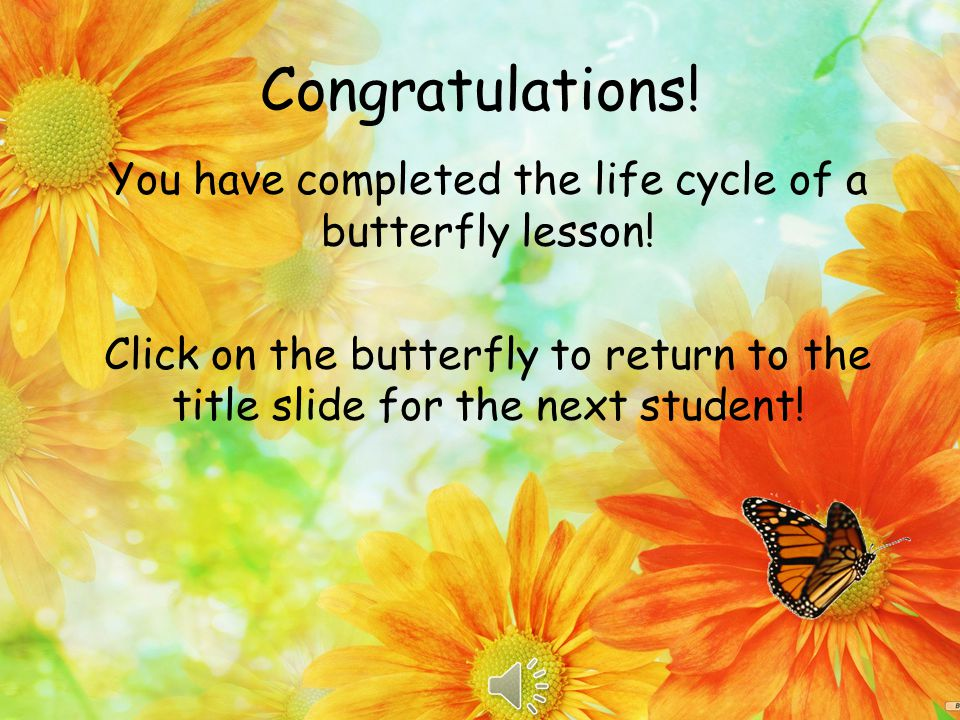 Incorrect. Click to Return to Question When the butterfly becomes an adult it is not in hiding.