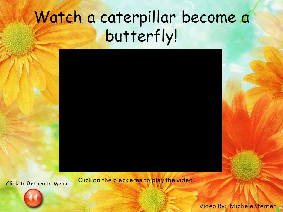 Watch a caterpillar become a butterfly.