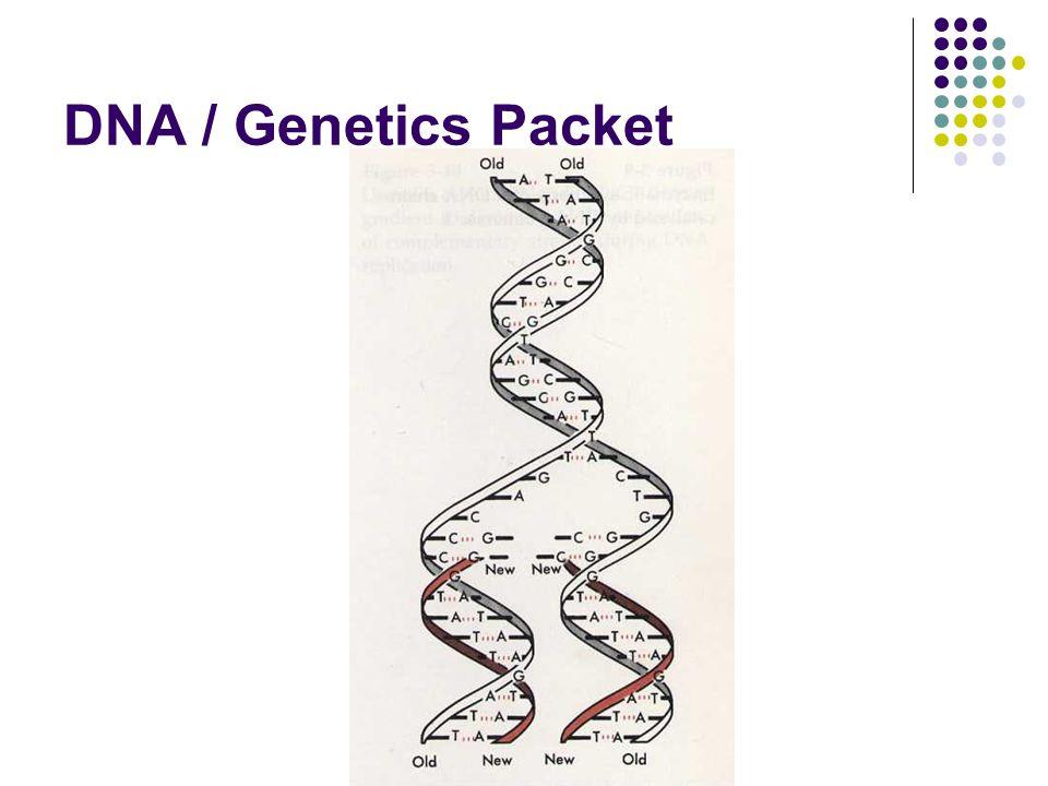 DNA / Genetics Packet
