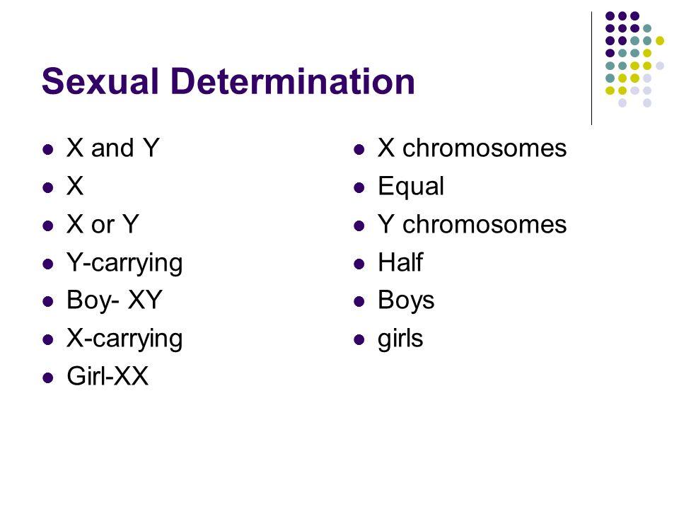 Sexual Determination X and Y X X or Y Y-carrying Boy- XY X-carrying Girl-XX X chromosomes Equal Y chromosomes Half Boys girls
