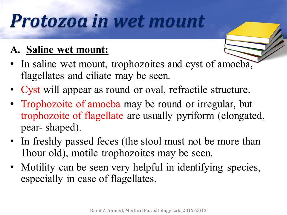 Snail for Schistosoma spp. Raed Z. Ahmed, Medical Parasitology Lab.,2012-2013