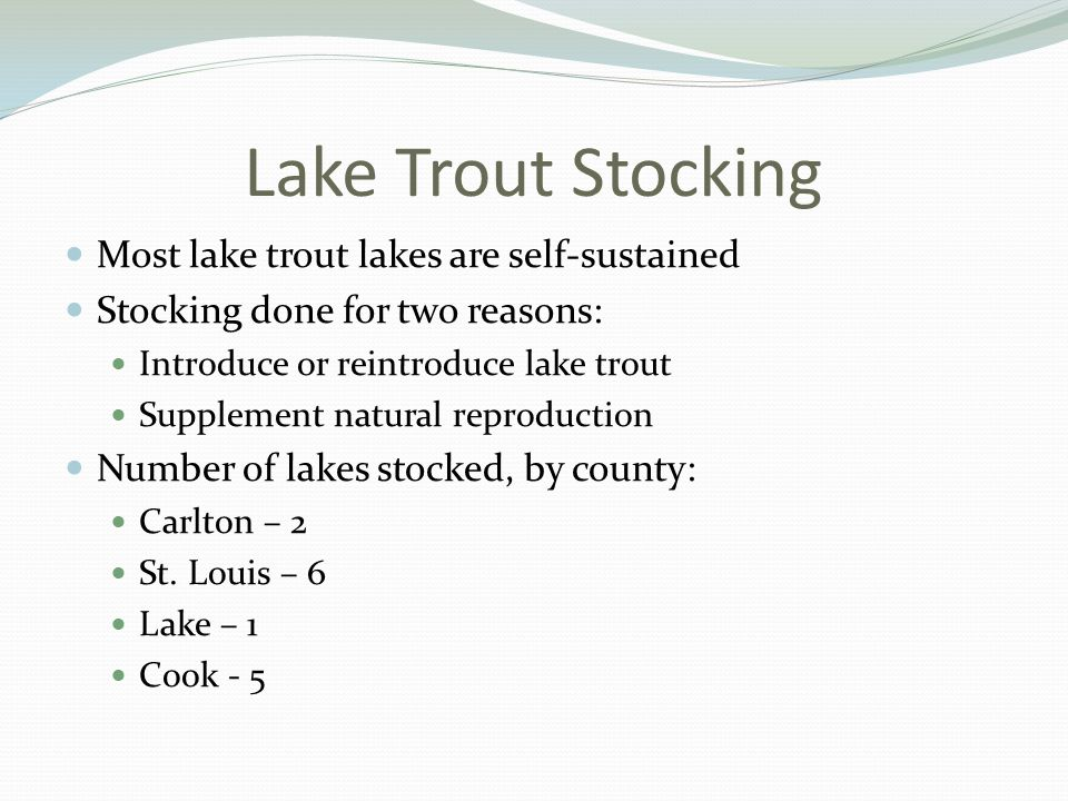 Lake Trout Stocking Most lake trout lakes are self-sustained Stocking done for two reasons: Introduce or reintroduce lake trout Supplement natural reproduction Number of lakes stocked, by county: Carlton – 2 St.